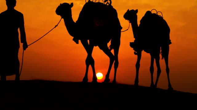 camels led desert sand arab male sunset silhouette - qatar bildbanksvideor och videomaterial från bakom kulisserna