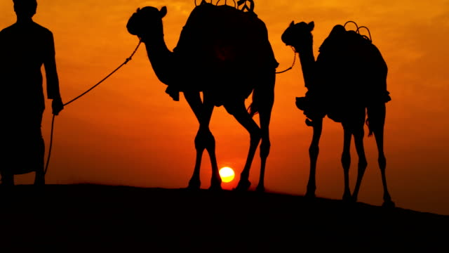 camels led over desert sand arab male sunset - サウジアラビア点の映像素材/bロール