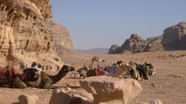 camels resting near a big sandstone rock in wadi rum desert, jordan - sandstone stock videos & royalty-free footage