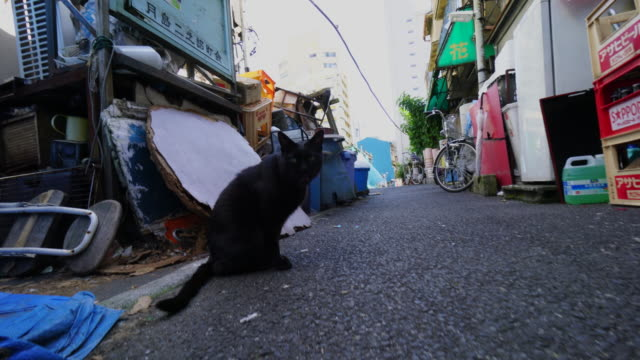 camera captures a black cat on the alleyway in tsukishima tokyo. - enge stock-videos und b-roll-filmmaterial