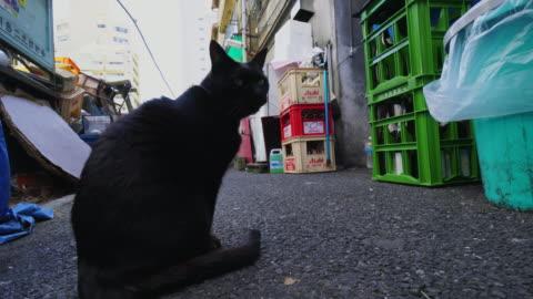 camera captures a black cat on the alleyway in tsukishima tokyo. - 路地点の映像素材/bロール