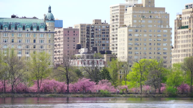 camera captures architectures of central park west historic district from central park reservoir in new york. rows of cherry blossoms trees are full-bloomed, and fresh green leaves are growing in springtime. - central park reservoir stock videos and b-roll footage