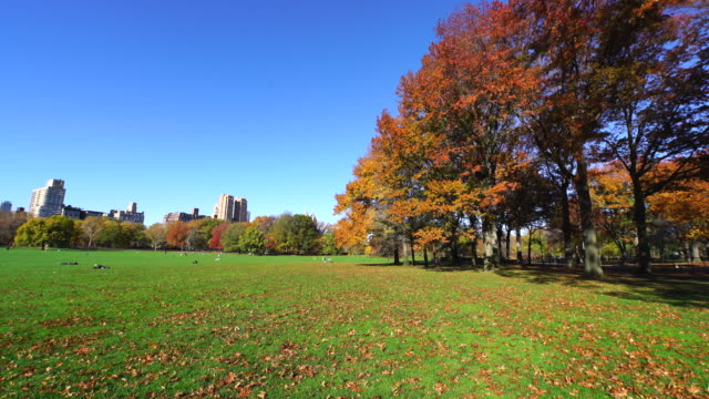 pan camera captures autumnal color trees and fallen leaves, which are blowing away by wind at sheep meadow. - sheep meadow central park stock videos and b-roll footage