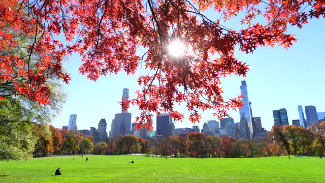 tu camera captures autumnal color trees and manhattan skyscrapers at sheep meadow central park.sunlight illuminates the meadow and leaves of autumnal trees. - sheep meadow central park stock videos and b-roll footage
