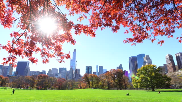 pan camera captures autumnal color trees and manhattan skyscrapers at sheep meadow central park.sunlight illuminates the meadow and leaves of autumnal trees. - sheep meadow central park stock videos and b-roll footage