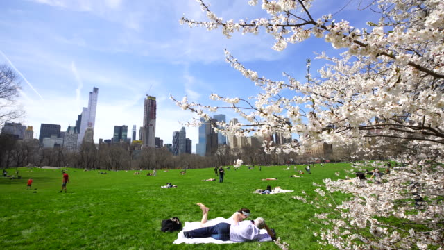 camera captures cherry blossoms trees, and people on the sheep meadow in central park new york. manhattan skyscrapers can be seen behind. - sheep meadow central park stock videos and b-roll footage