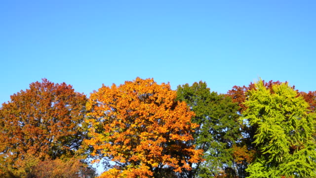 camera captures colorful autumn trees at central park new york. - treetop stock videos & royalty-free footage