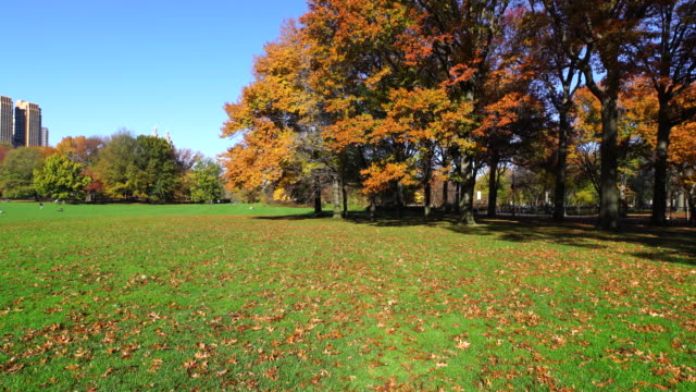 TU Camera captures fallen leaves and autumnal color trees at Sheep Meadow.