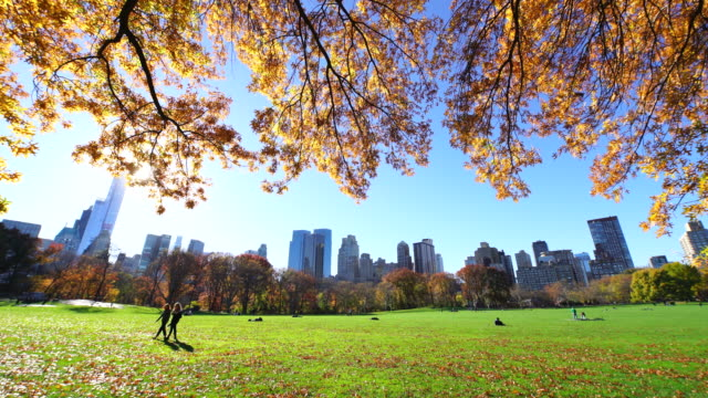 tu camera captures manhattan skyscrapers behind rows of autumnal color trees and fallen leaves.sunlight illuminates the meadow and leaves of autumnal trees.people walk on the sheep meadow. - sheep meadow central park stock videos and b-roll footage