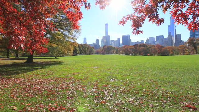 TU Camera captures Manhattan skyscrapers from between illuminated autumn color leaves by sun. Sheep Meadow Central Park.