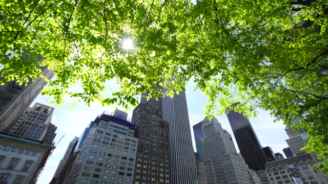 Camera captures Midtown Manhattan skyscrapers behind the fresh green trees.