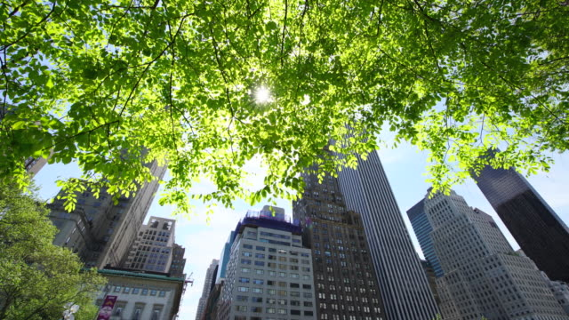 PAN Camera captures Midtown Manhattan skyscrapers behind the fresh green trees.