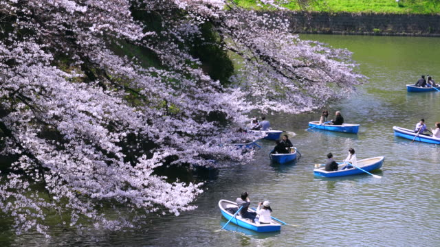 Camera captures people enjoy boat  at Chidorigafuchi moat, which are surrounded by Cherry blossoms.