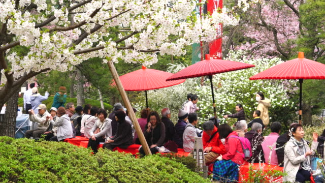 Camera captures people under the cherry blossom with Japanese traditional umbrella at National Theatre of Japan at Japan Cherry Blossom Festival.