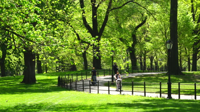 Camera captures people walk down a pathway, which goes through the rows of fresh green trees at Central Park.