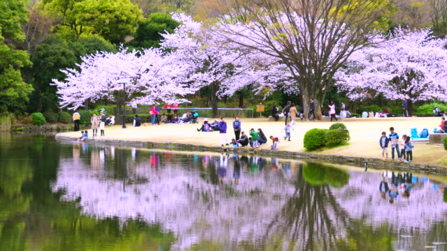 Camera captures reflection of people and Cherry blossoms trees to the pond at Kitanomaru Park Chidorigafuchi Imperial Palace.