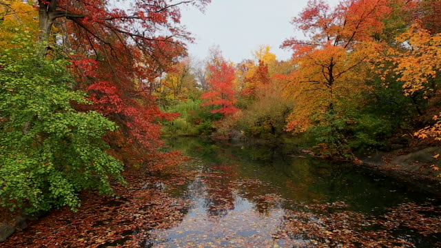 pan camera captures the autumnal color trees and fallen leaves on the lake at central park. - autumn leaf color stock videos and b-roll footage