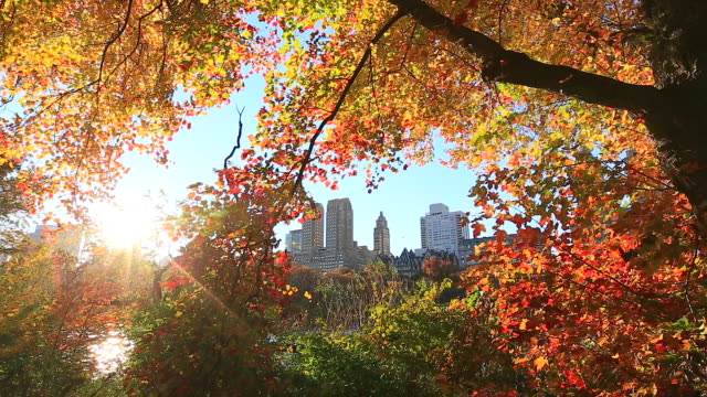 TU Camera captures the Central Park West Residences from between the illuminated autumn color trees at sunset. The Lake can be seen at the bottom.