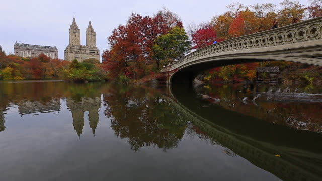 camera captures the flying goose and reflections of people on the bow bridge and autumn color trees in the lake. central park west residents and the san remo can be seen behind. - four animals stock videos & royalty-free footage