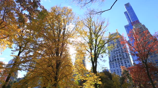 PAN Camera captures the illuminated autumnal trees and structures by morning sun at Central Park.