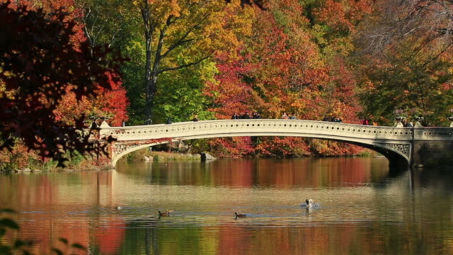vidéos et rushes de camera captures the reflections of people on the bow bridge and autumn color trees in the lake through the trees. - petit groupe d'animaux