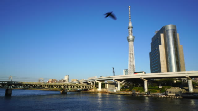 camera captures tokyo sky tree and downtown cityscape behind the tokyo expressway traffic in sumida ward from asakusa, taito ward. birds fly over the river. - スカイツリー点の映像素材/bロール