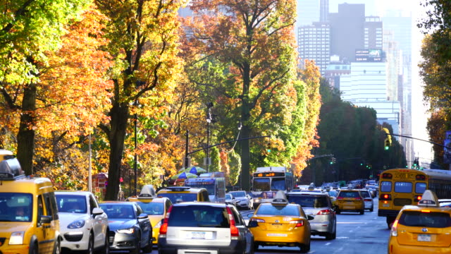 Camera captures traffic beside Autumnal Central Park, which are surrounded by autumn color trees line at 8th Avenue New York.  Midtown skyscrapers can be seen behind.