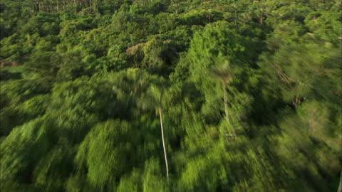vídeos y material grabado en eventos de stock de camera flies from amazon rainforest to manaus city over river - región del amazonas