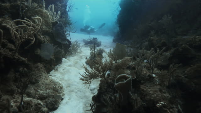 camera follows scuba diver through underwater trench in the caribbean - trench stock videos & royalty-free footage