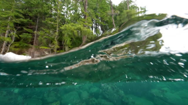 camera just underwater, surface above and below in view, pine trees, vancouver island, canada - gerechtigkeit stock-videos und b-roll-filmmaterial