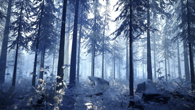 camera movement through the snowy winter forest - pine tree stock videos & royalty-free footage
