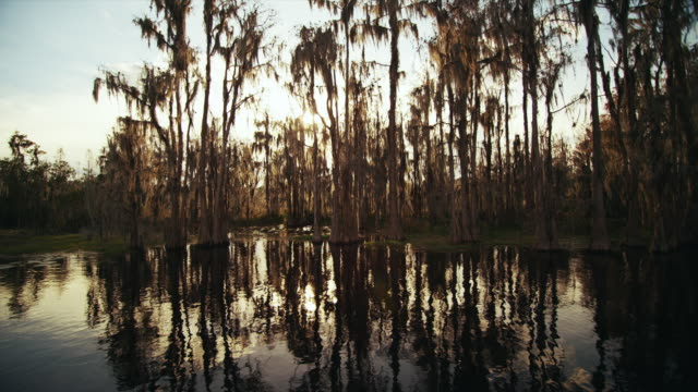 Camera moves along the surface of the water and sun glints through cypress trees and Spanish moss in a swamp.