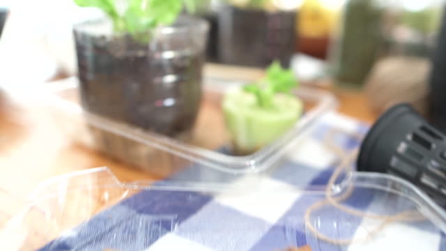 camera moves from seeds planted in teabags to vegetables growing indoors - celery stock videos & royalty-free footage