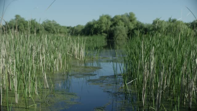 stockvideo's en b-roll-footage met camera moves through reeds to reveal large open river - moeras