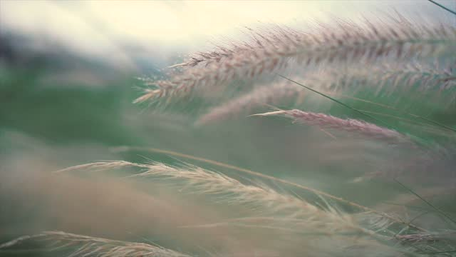 vidéos et rushes de appareil-photo se déplaçant vers l'avant par l'herbe verte fraîche de source sur la pré jolie. - mise au point
