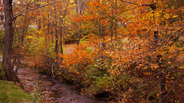 Camera pans across creek surrounded by Fall colors