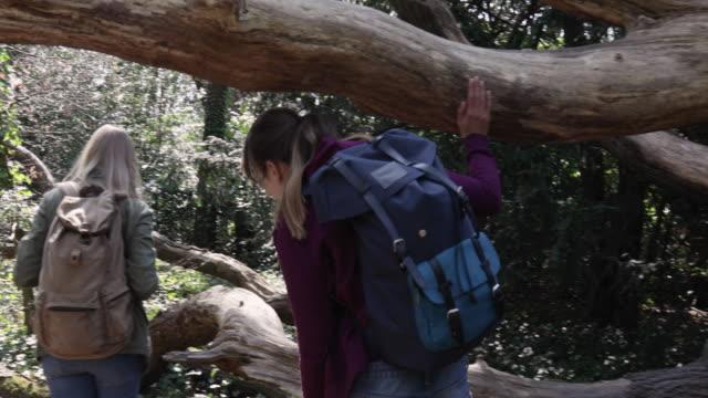 Camera stabilizator shot following women, hiking through woodland.