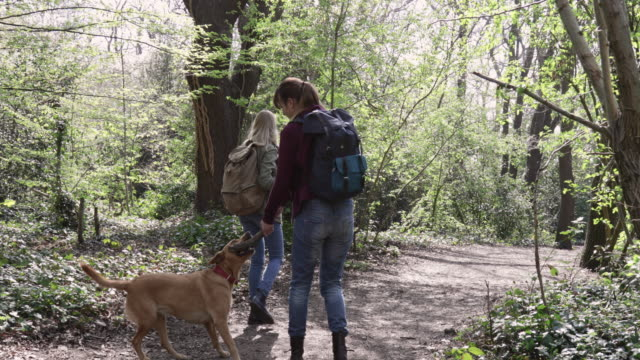 camera stabilizator shot of women playing with dog, while walking in forest. - footpath stock videos & royalty-free footage