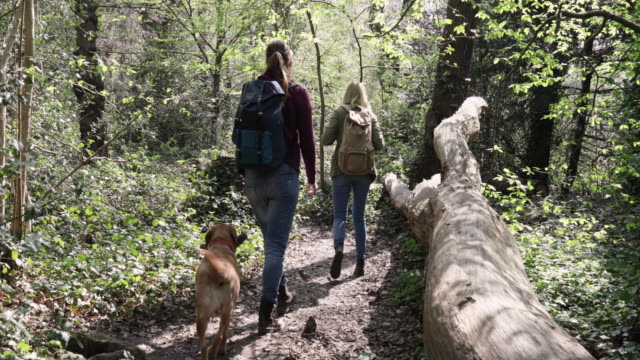 Camera stabilizator shot of women walking in forest, followed by dog carrying stick.
