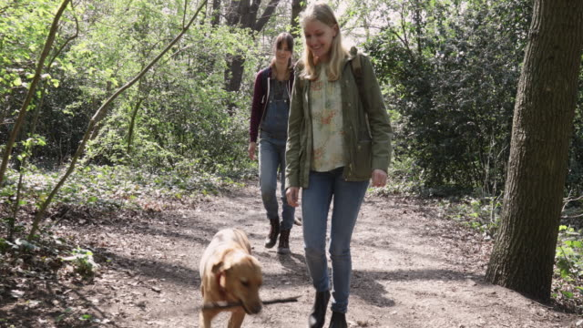 Camera stabilizator shot of women walking with dog carrying large stick in forest.