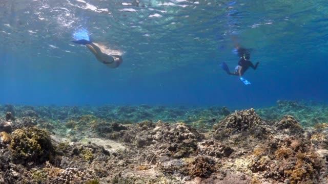 stockvideo's en b-roll-footage met camera swimming over coral reef toward two snorkelers - scubaduiken