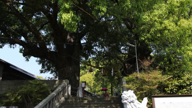 camera tilt up and down, showing a young woman with a sun umbrella going down a stone staircase as passing by the camphor trees of the sanno shrine,... - 大量破壊兵器点の映像素材/bロール