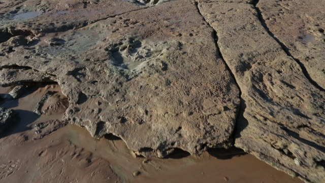 camera track following over theropod dinosaur footprints in coastal rock - ancient stock videos & royalty-free footage