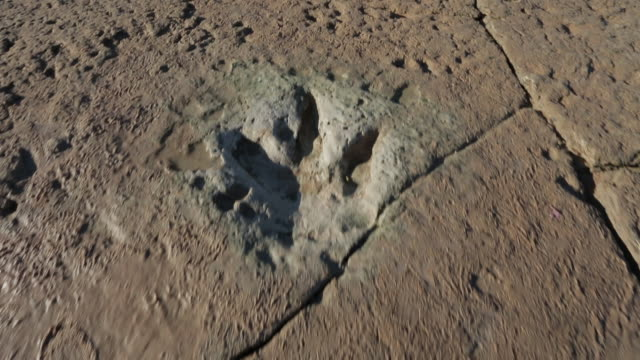 camera track following  over theropod dinosaur footprints in coastal rock - archaeology stock videos & royalty-free footage