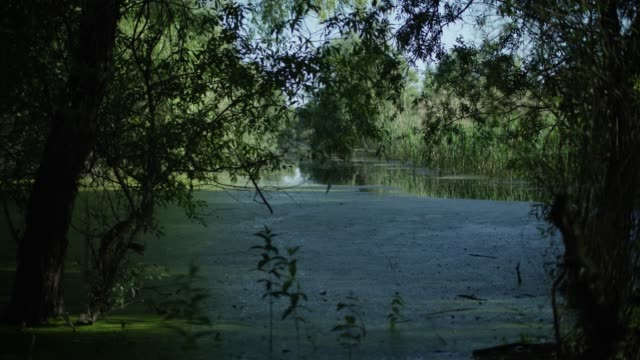 camera tracks back from river into shade beneath trees - river danube stock videos & royalty-free footage