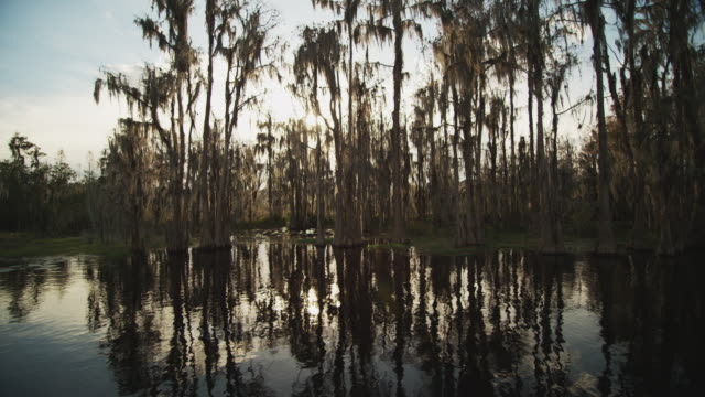vídeos y material grabado en eventos de stock de camera tracks on the water with sun refractions through a grove of cypress trees and spanish moss in a swampy wetland. - musgo español