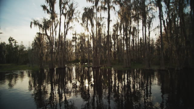 camera tracks on the water with sun refractions through a grove of cypress trees and spanish moss in a swampy wetland. - wide shot stock videos & royalty-free footage