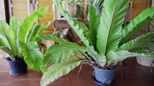 カメラの熱帯観葉植物の右から左へのパン - 観葉植物点の映像素材/bロール
