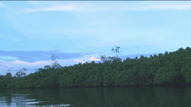 camera travels down local sipadan river on a balmy evening - sabah state stock videos and b-roll footage