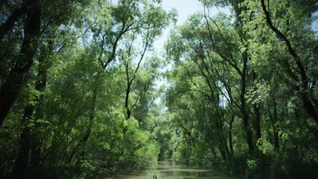 camera travels down small river surrounded by tall trees - donau stock-videos und b-roll-filmmaterial